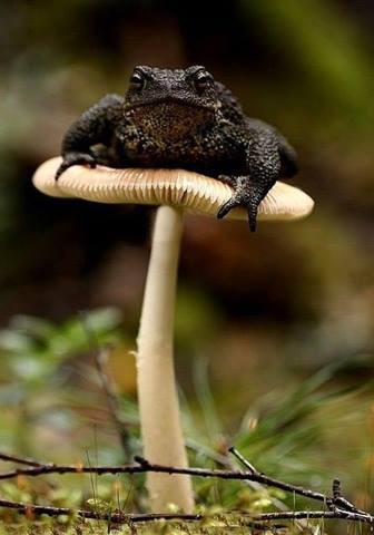 frog on shroom